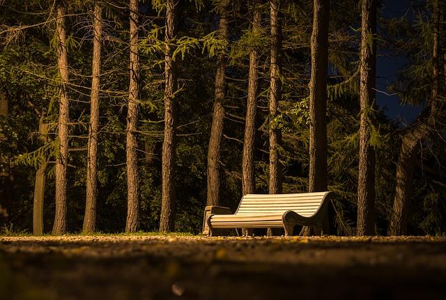 dřevěná lavička v parku